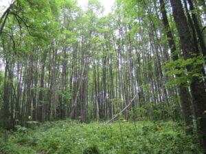 Алтайская пасека