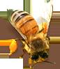 Алтайский мед 2