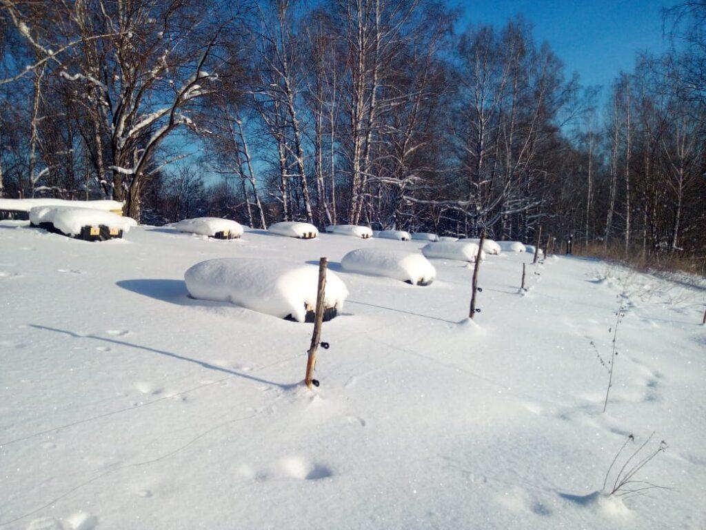 зимняя пасека ульи